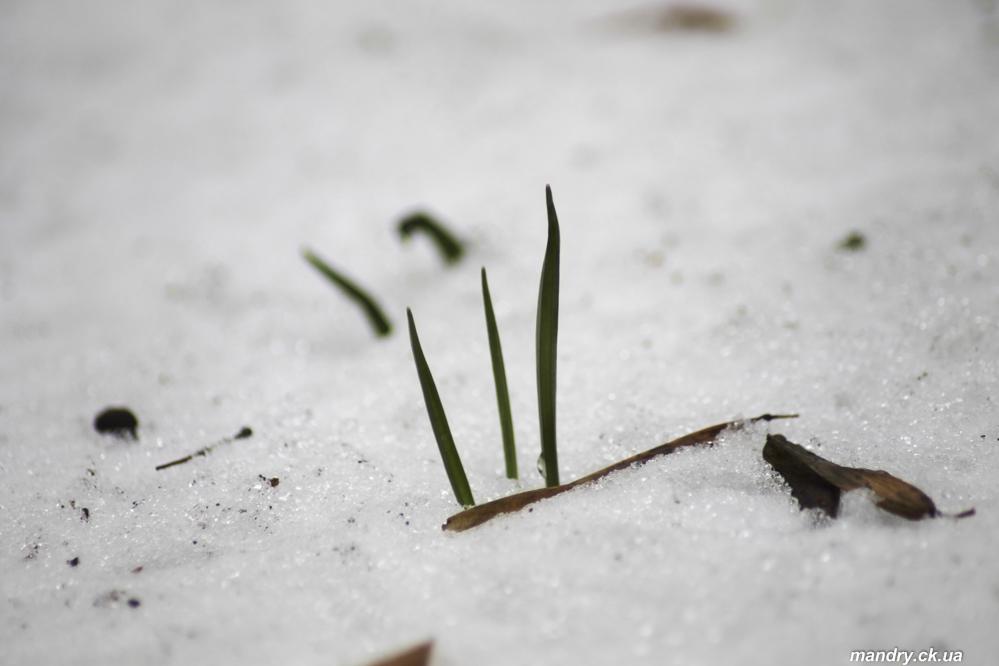 Весна в Холодному Яру