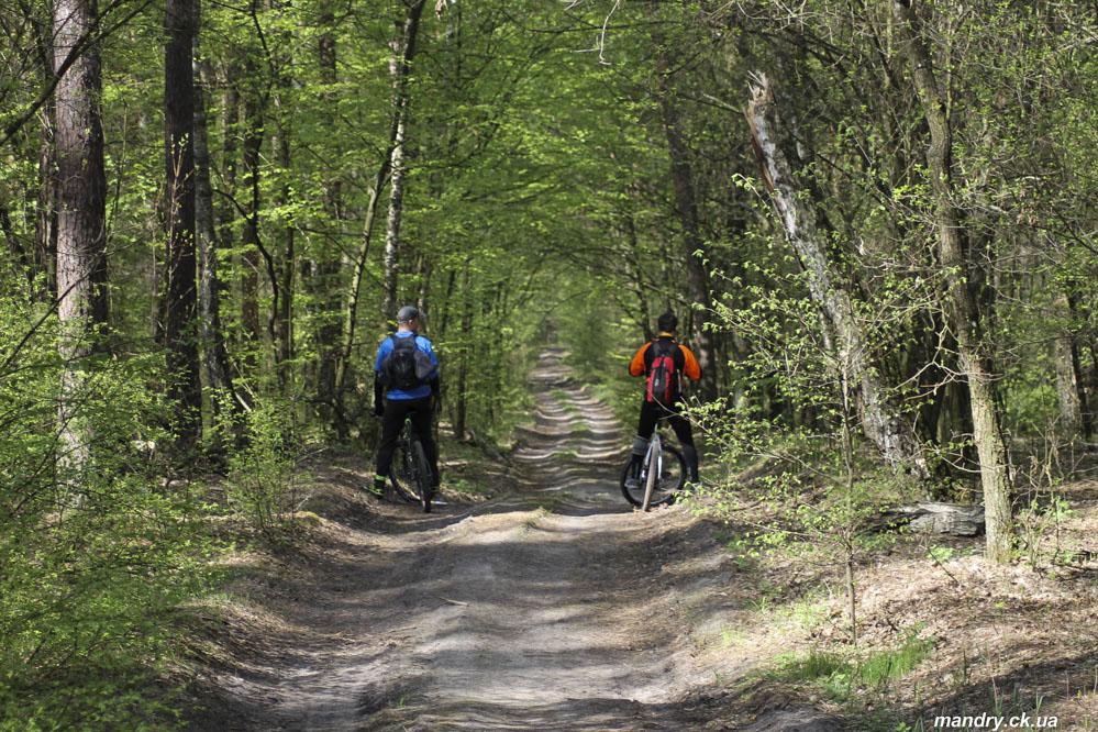 ліс біля Оршанця
