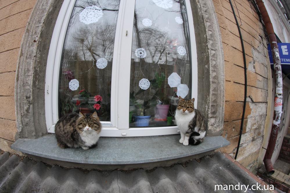 Одеські коти