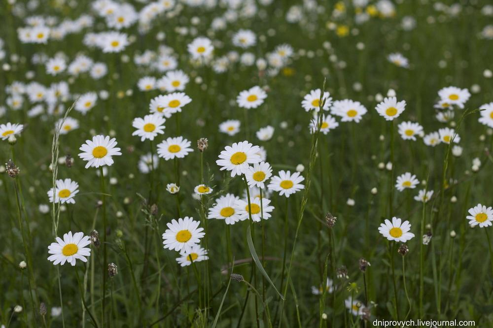 Десять ідей весняної подорожі