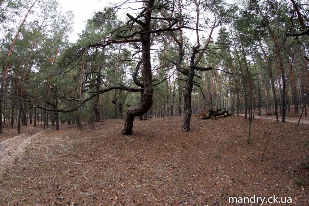 казковий ліс Думанці