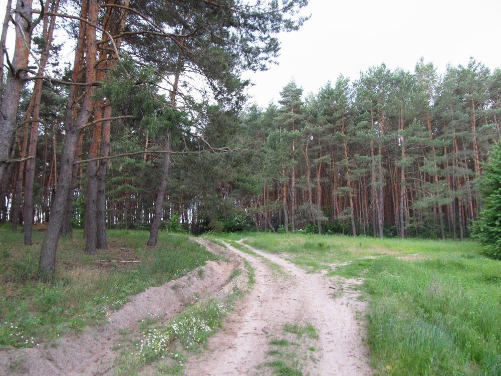 Ліс біля Крутьок