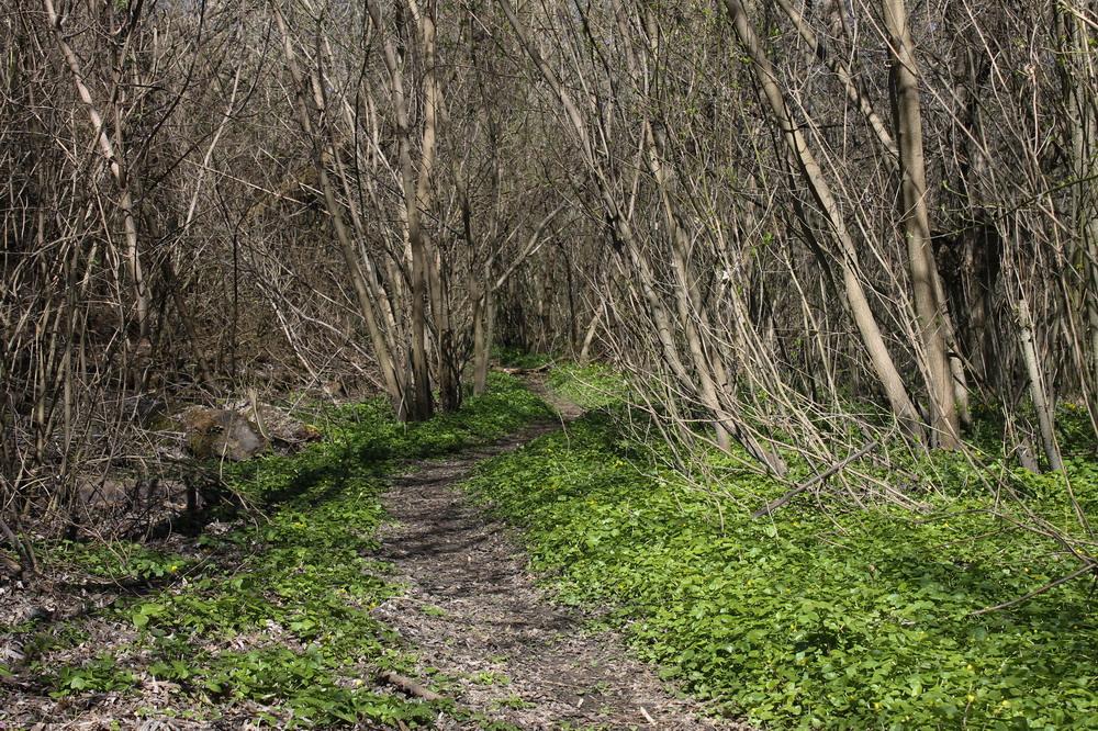 ліс поблизу Сміли