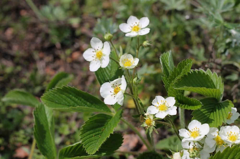 квіти на каскадах