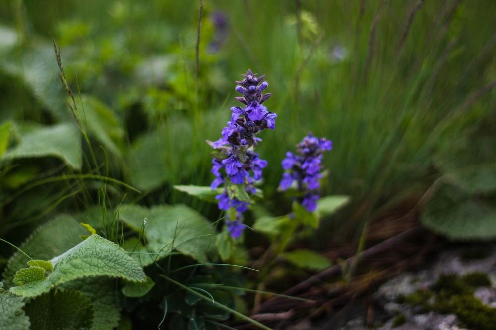 квіти урочище Каскади
