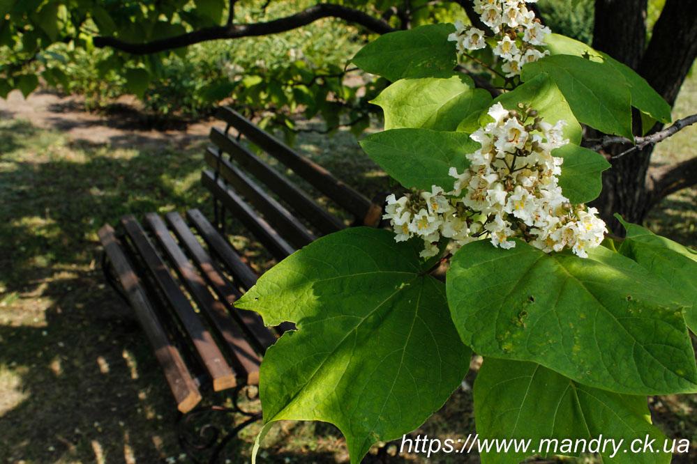 Ботанічний сад в Кривому Розі