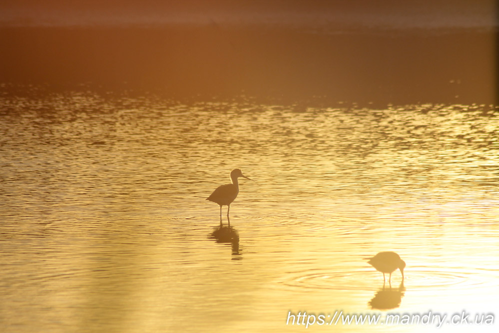 птахи на Бердянській косі