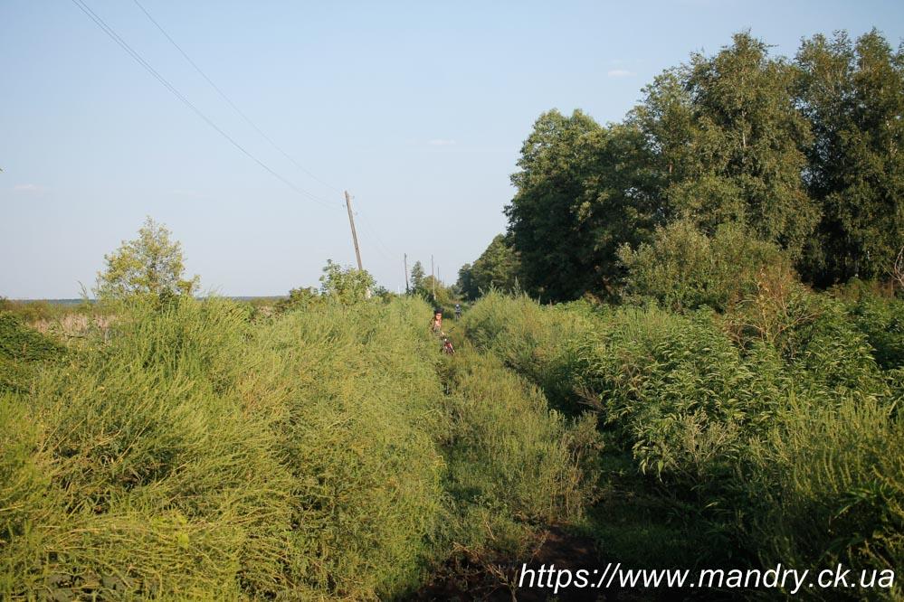 дорога вздовж болота