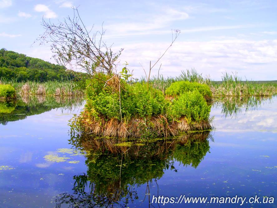 острівець на болоті