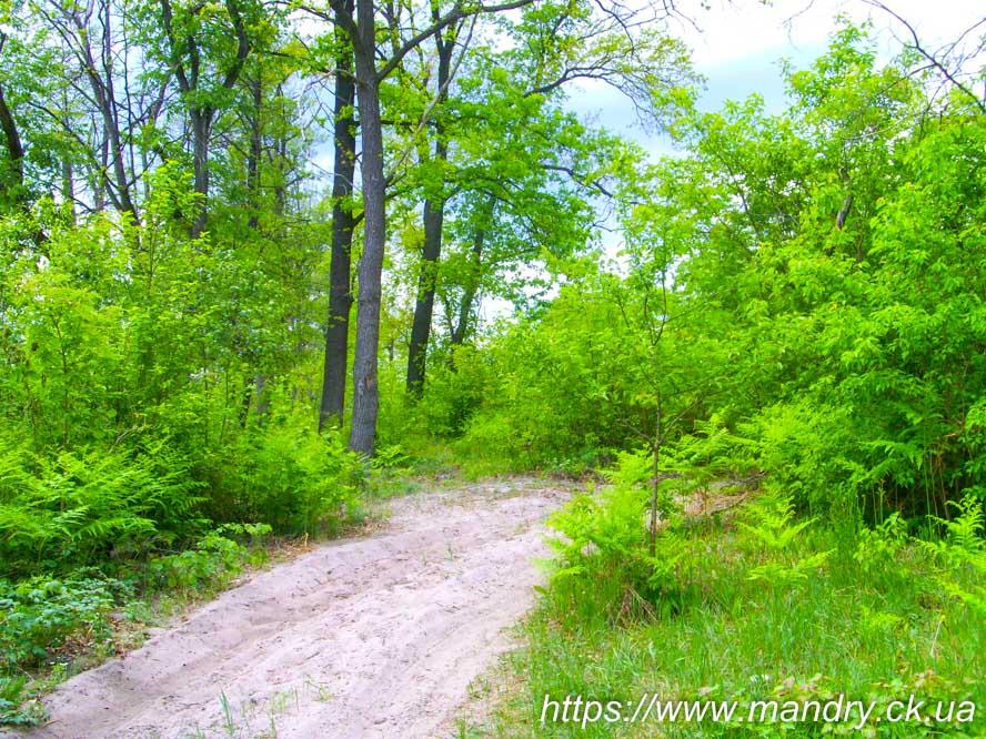 болотний ліс