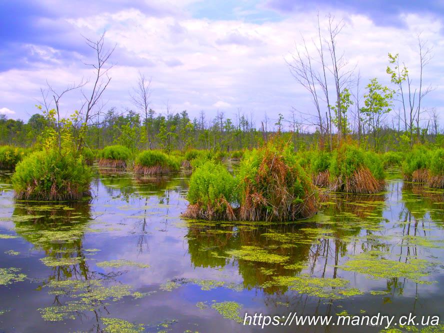 кочки на болоті