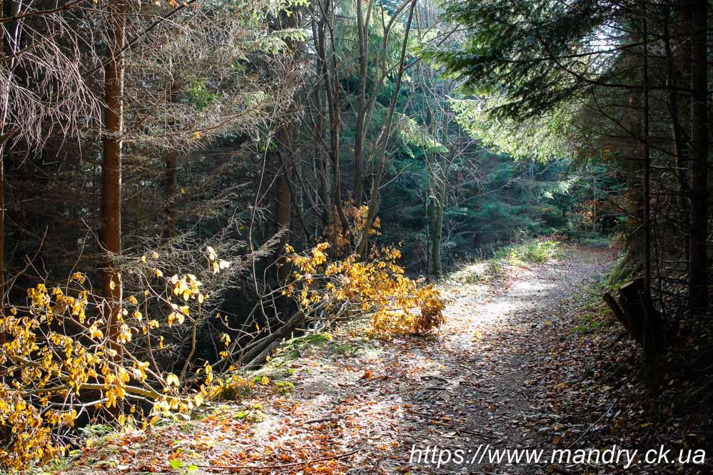 ліс в Словаччині