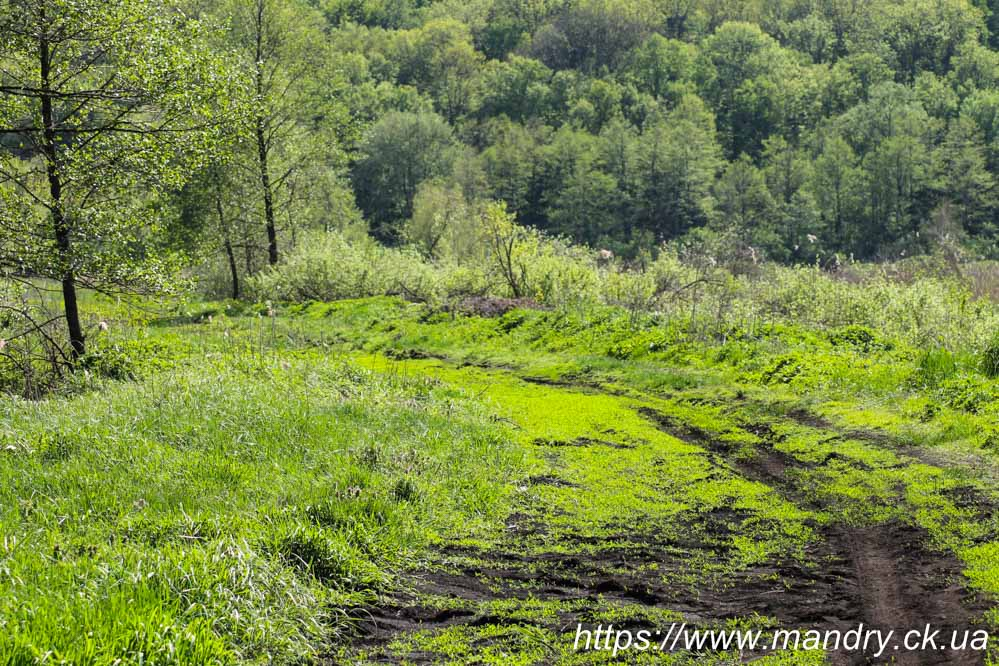 дорога по греблі на болоті Ірдинь