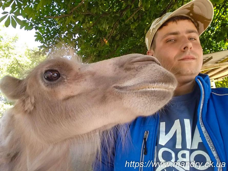 Dniprovych і верблюд