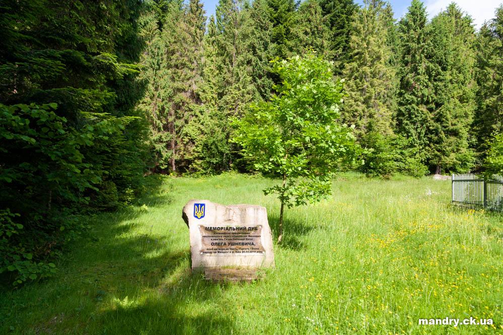 Меморіальний дуб Олега Ушневича