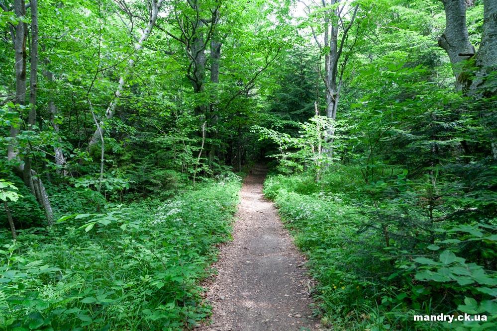 дорога на Парашку через ліс